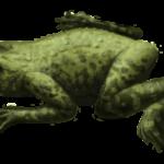 Liaobatrachus