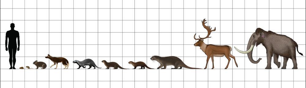 Тварини Корсики-Сардинії. Зліва направо: Tyrrhenicola henseli, Rhagamys orthodon, Prolagus sardus, Cynotherium sardous, Enhydrictis galictoides, Lutra castiglionis, Sardolutra ichnusae, Megalenhydris barbaricina, Praemegaceros cazioti, Mammuthus lamarmorae.