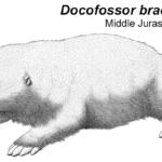 Docofossor