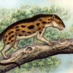 Agriochoerus