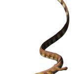 Pleurosaurus