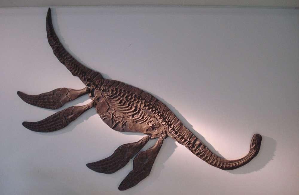 Скам'янілість Seeleyosaurus guilelmiimperatoris з реконструйованими частинами.