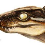 Ogresuchus