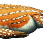 Triopticus