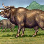 Euceratherium